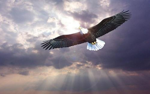 Eagle-Flying on top of clouds.